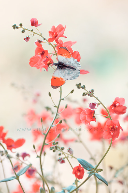 Photograph Camouflage by Magda Wasiczek on 500px