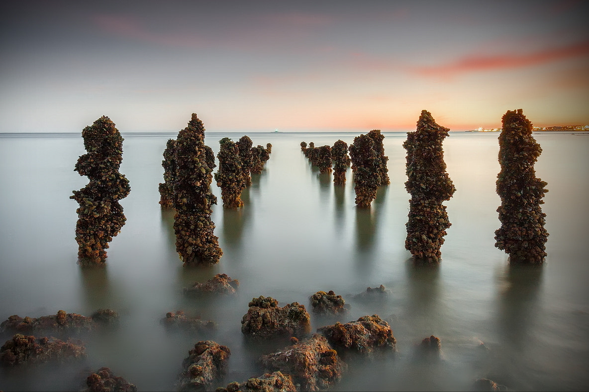 Photograph Aliens of the Deep.  by Paulo FLOP on 500px