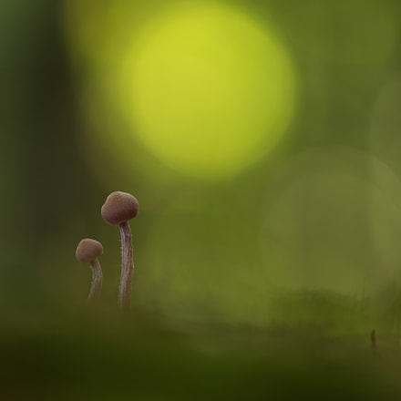 Twins in the Forrest