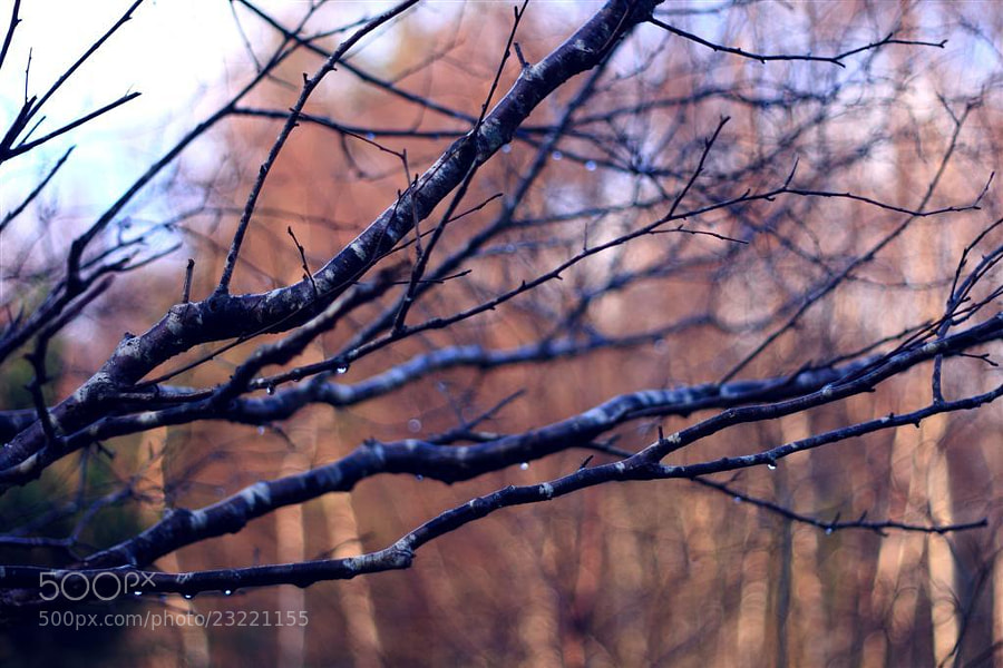 Photograph Blue branches by Annie Japaud on 500px