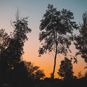 #salamanca #arboles #atardecer #sol #cielo #sombras #silueta #naturaleza #trees #sundown #sun...