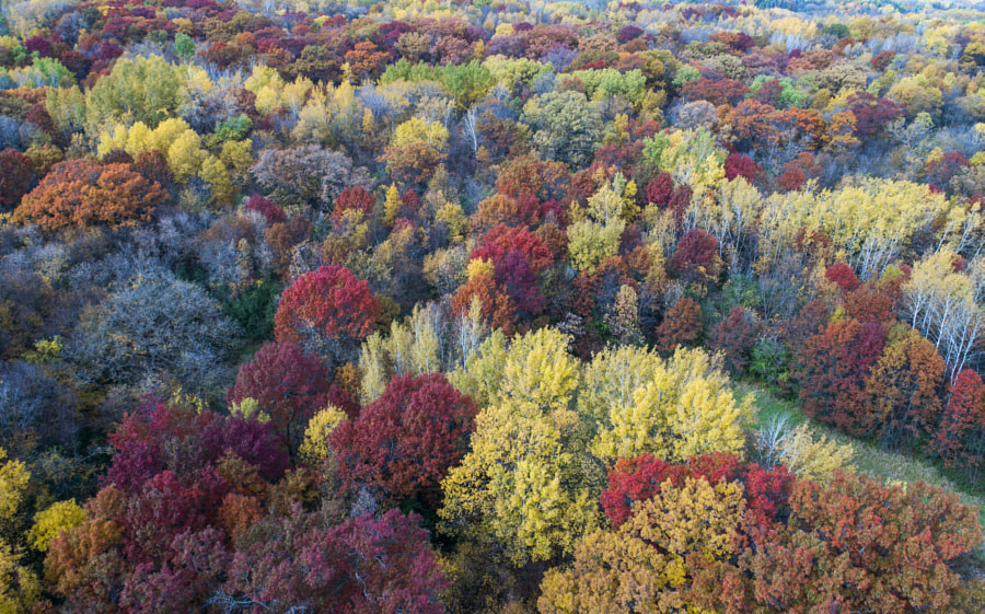 Drone Fall Colors Full by Binary Blogger on 500px.com