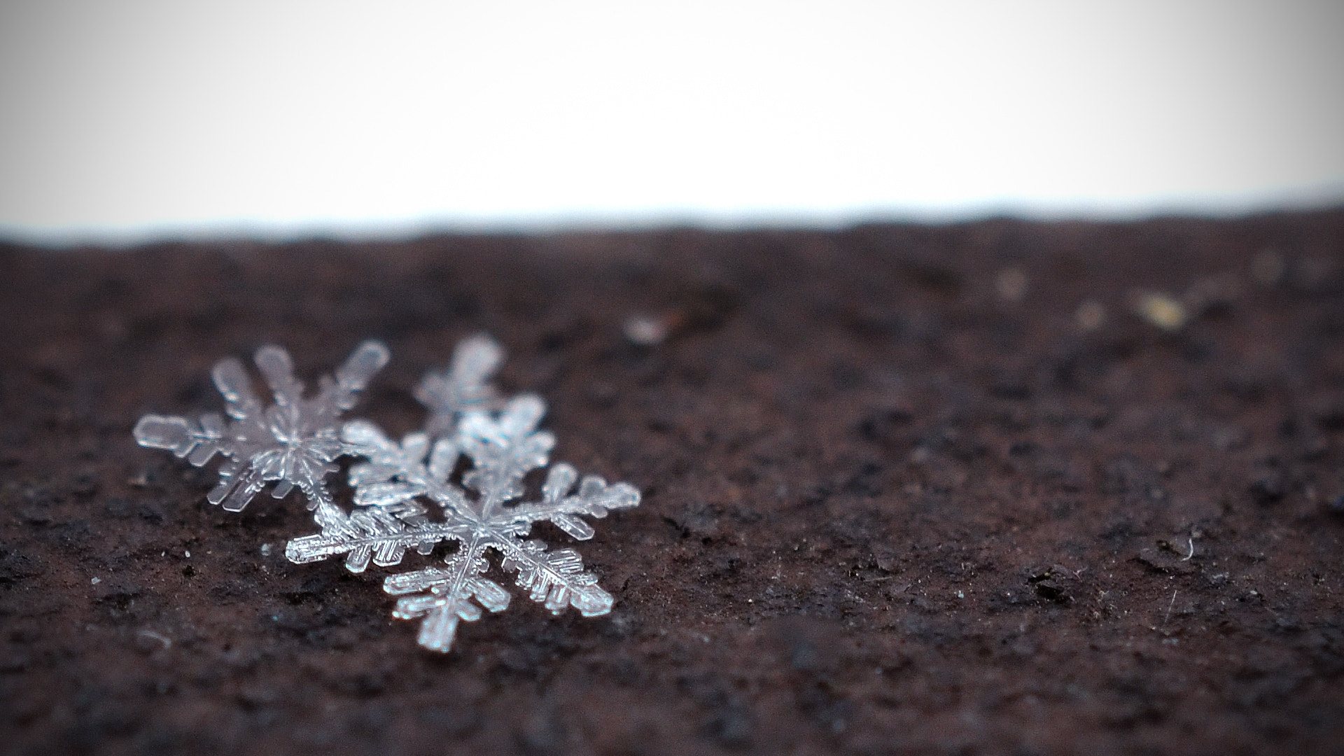 Photograph Snowflake by R Smit on 500px