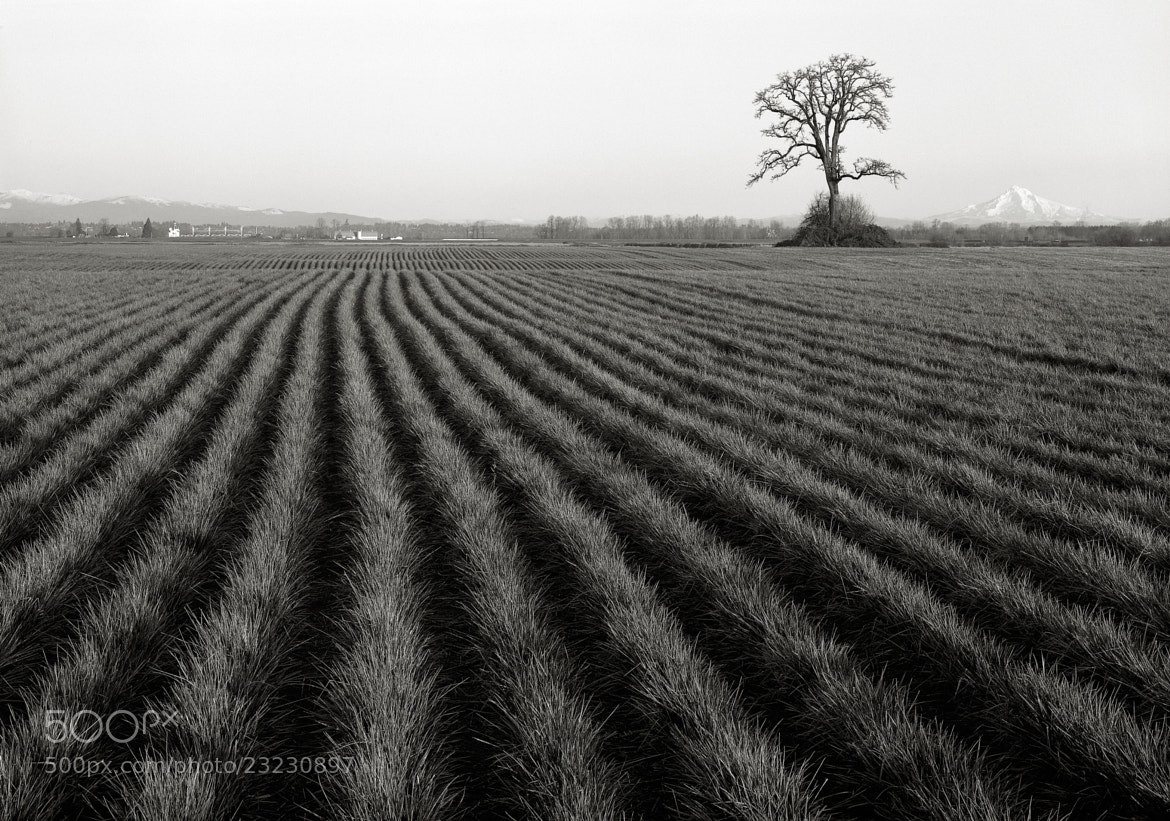 Photograph Furrowed Field, Sauvie Island, Oregon by Austin Granger on 500px
