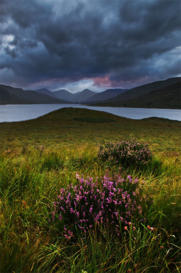 Photograph Arklet Heather by Chris Jones on 500px