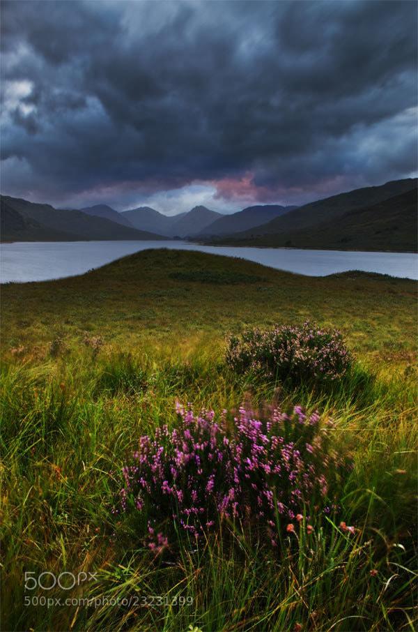 Photograph Arklet Heather by Chris Jones on 500px
