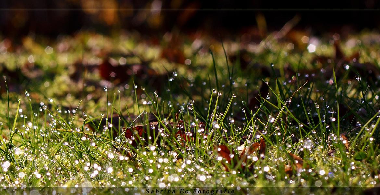 Photograph little diamonds by Sabrina Ec on 500px