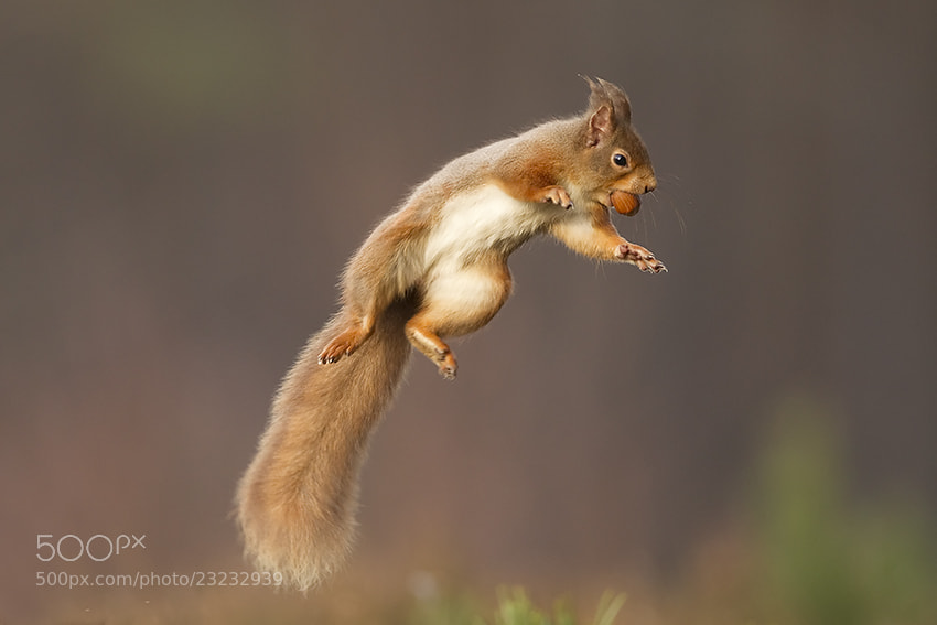 Olympian! by Peter Cairns on 500px.com