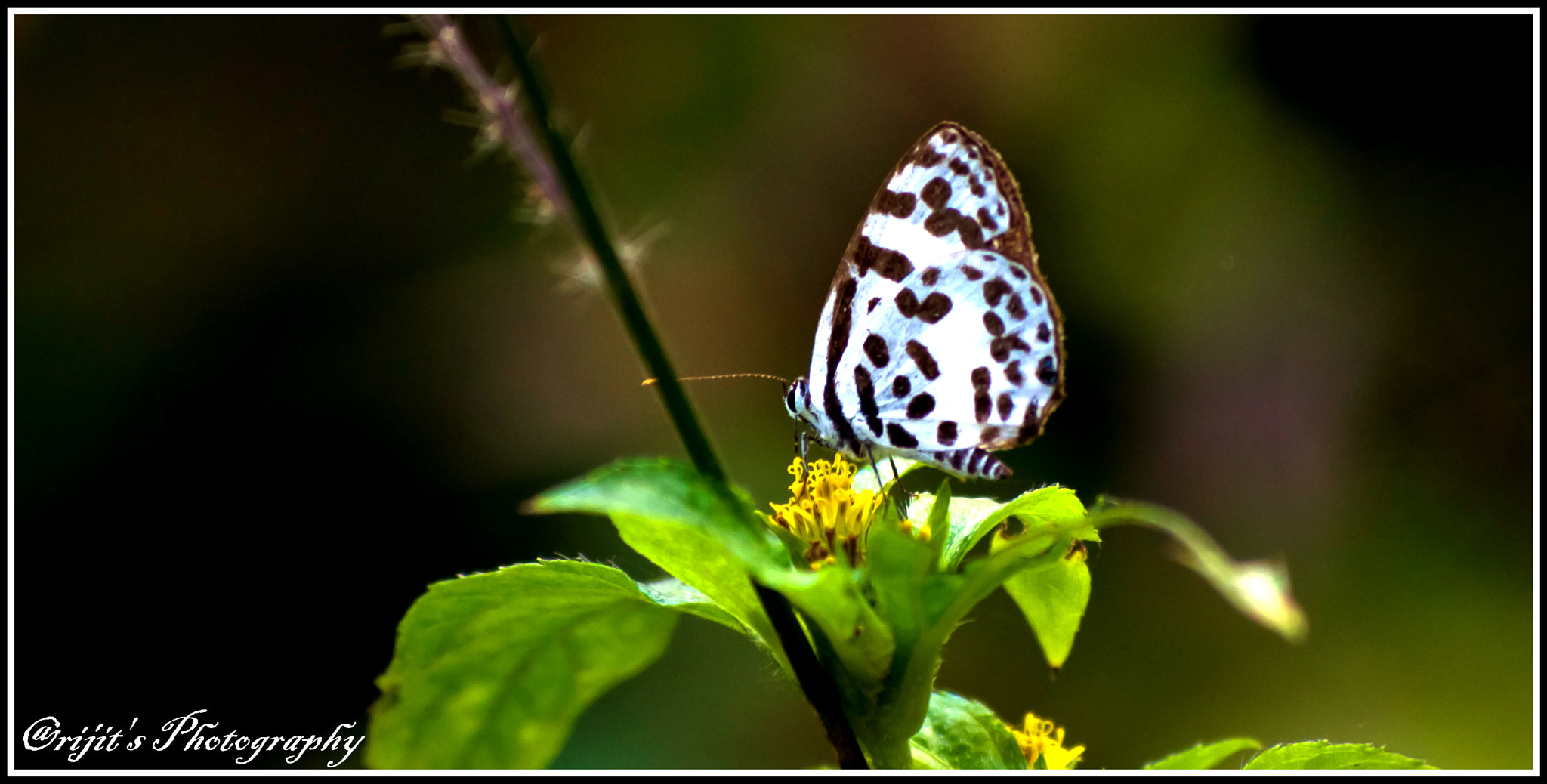 Photograph Tiny Butterfly by Arijit Bose on 500px