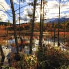 Beside a pond