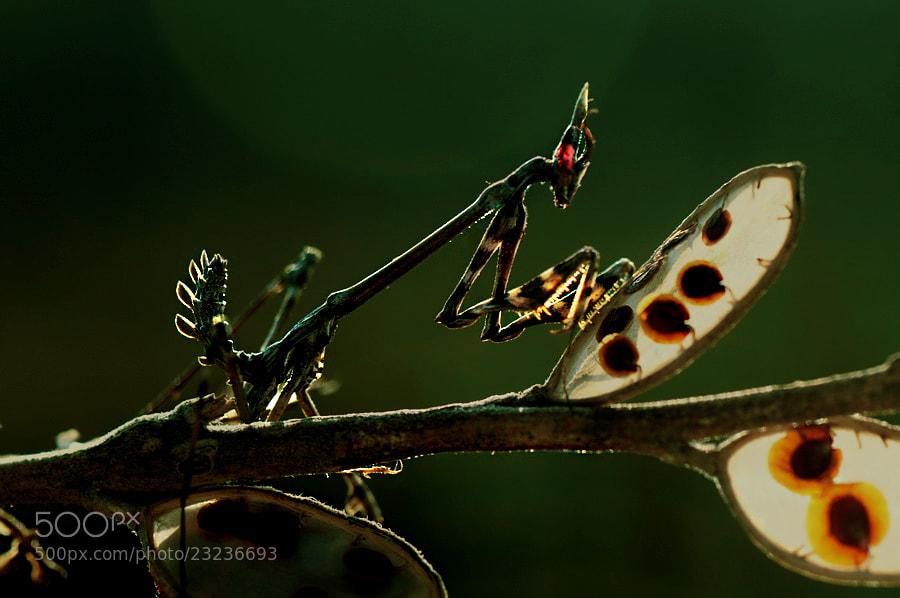 Photograph red-eyed hunter by yilmaz uslu on 500px
