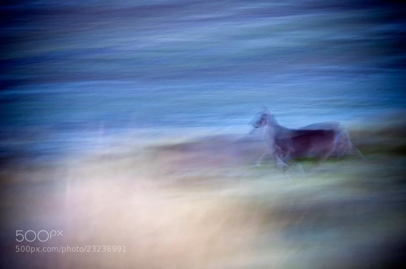 Photograph The Runner by Fernando Salas on 500px