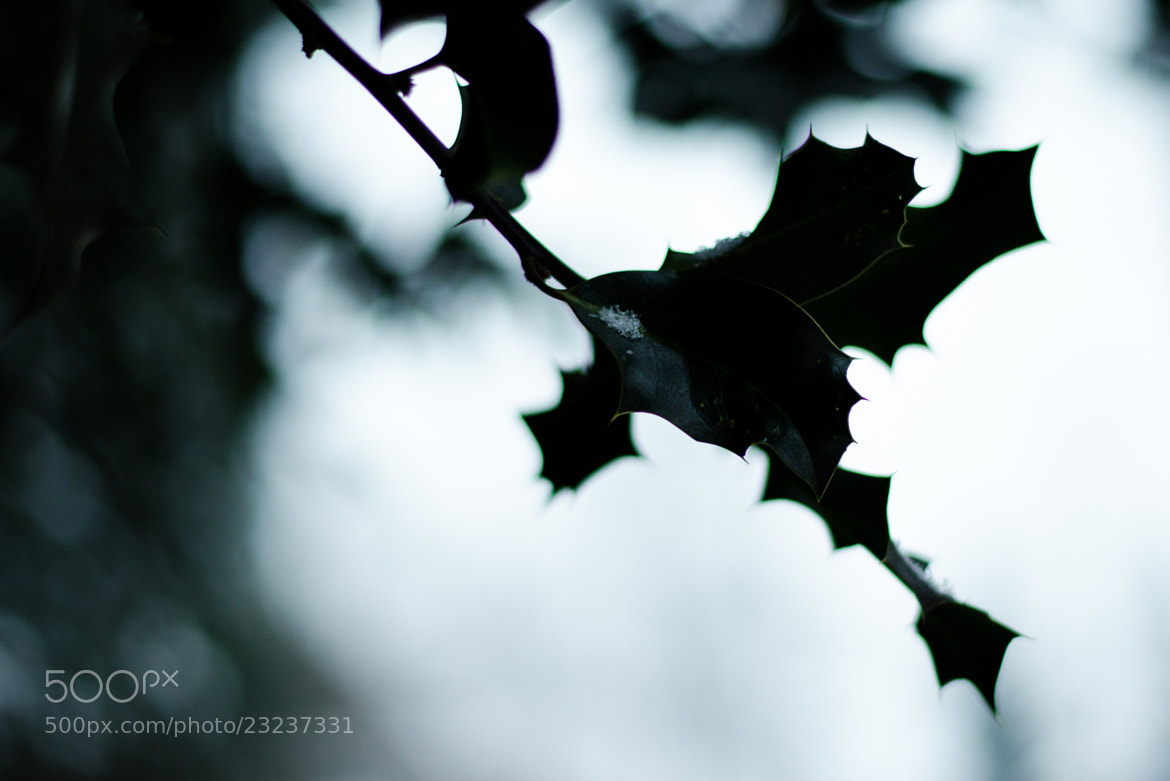 Photograph Dark Thorns by Henry Buttchereit on 500px