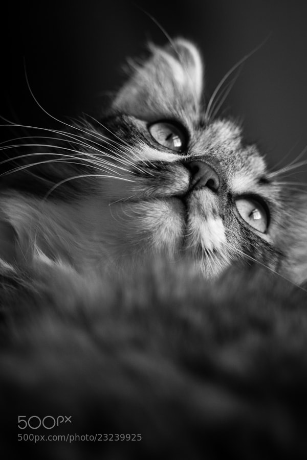 Photograph Cat by Jari Peltoniemi on 500px