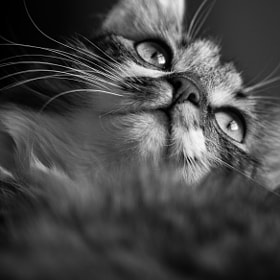 Cat by Jari Peltoniemi (jari-peltoniemi)) on 500px.com