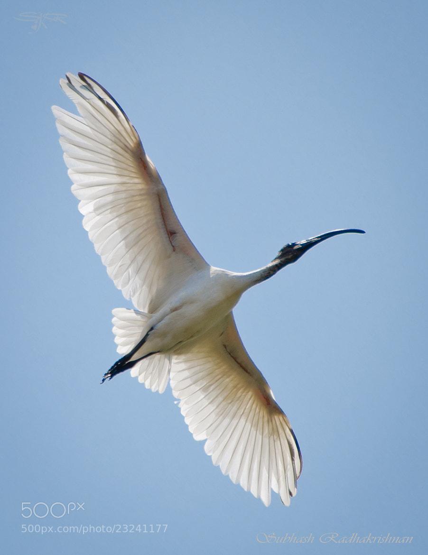 Photograph Like an angel in the sky!!! by Subhash Radhakrishnan on 500px