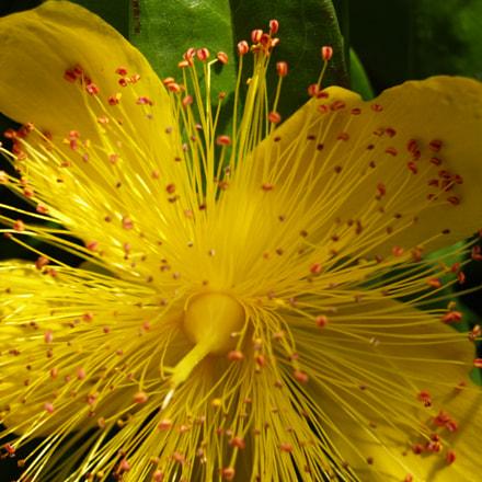 Yellowich
