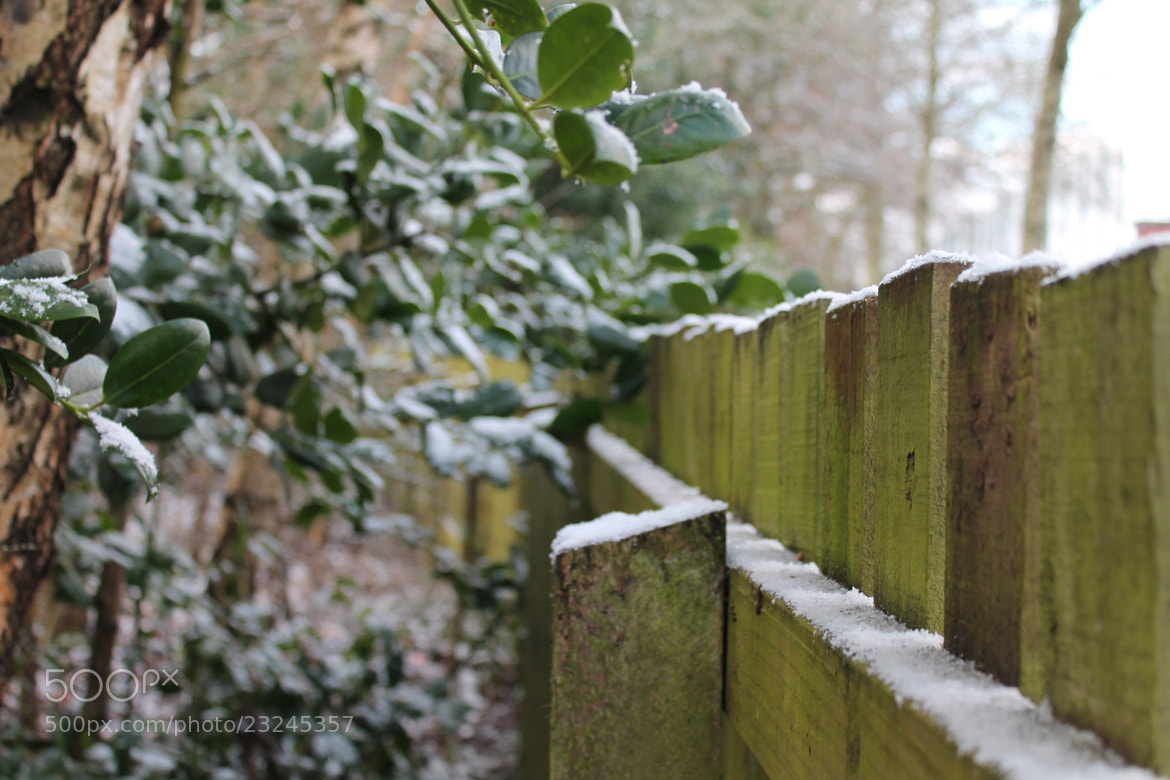 Photograph Fence in winter by Euan  McLaren on 500px