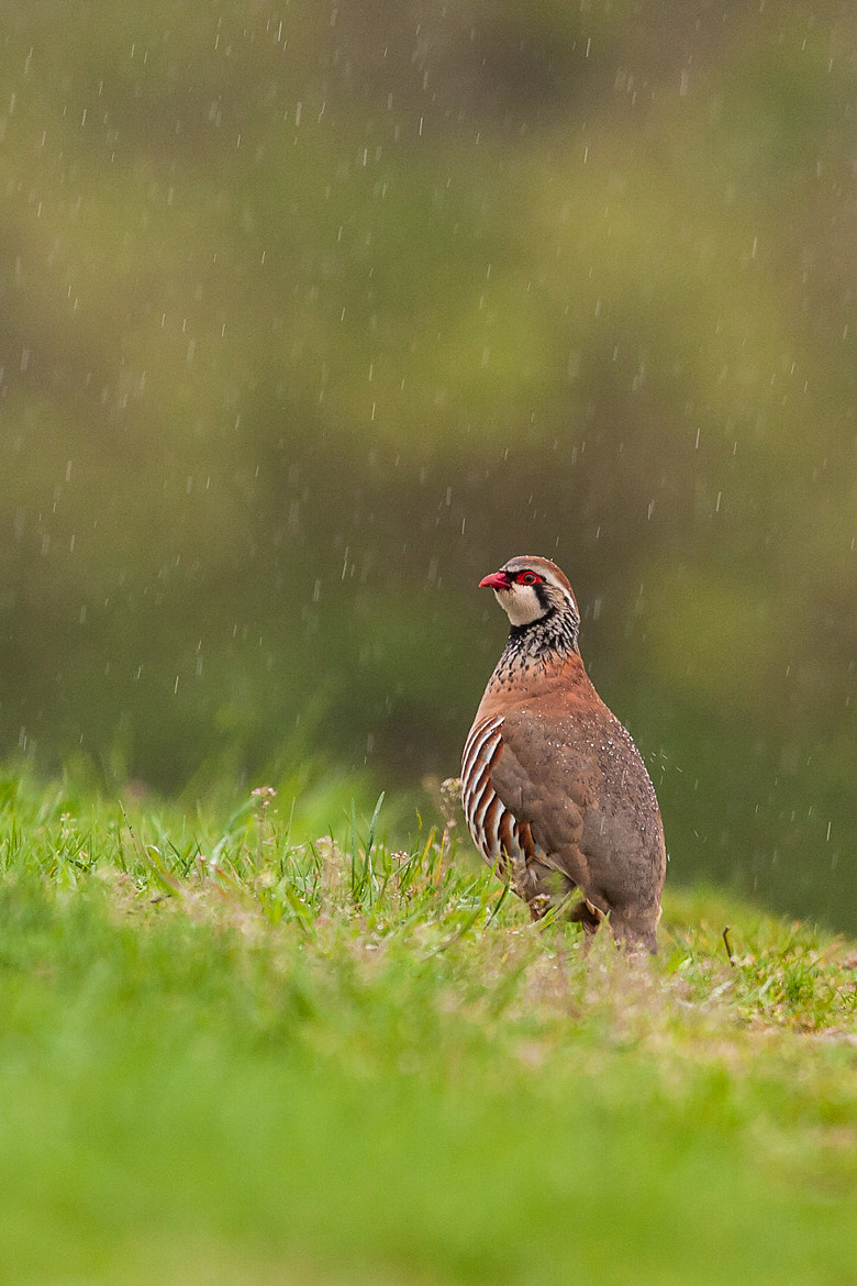 Photograph Under the rain by Marc Pihet on 500px