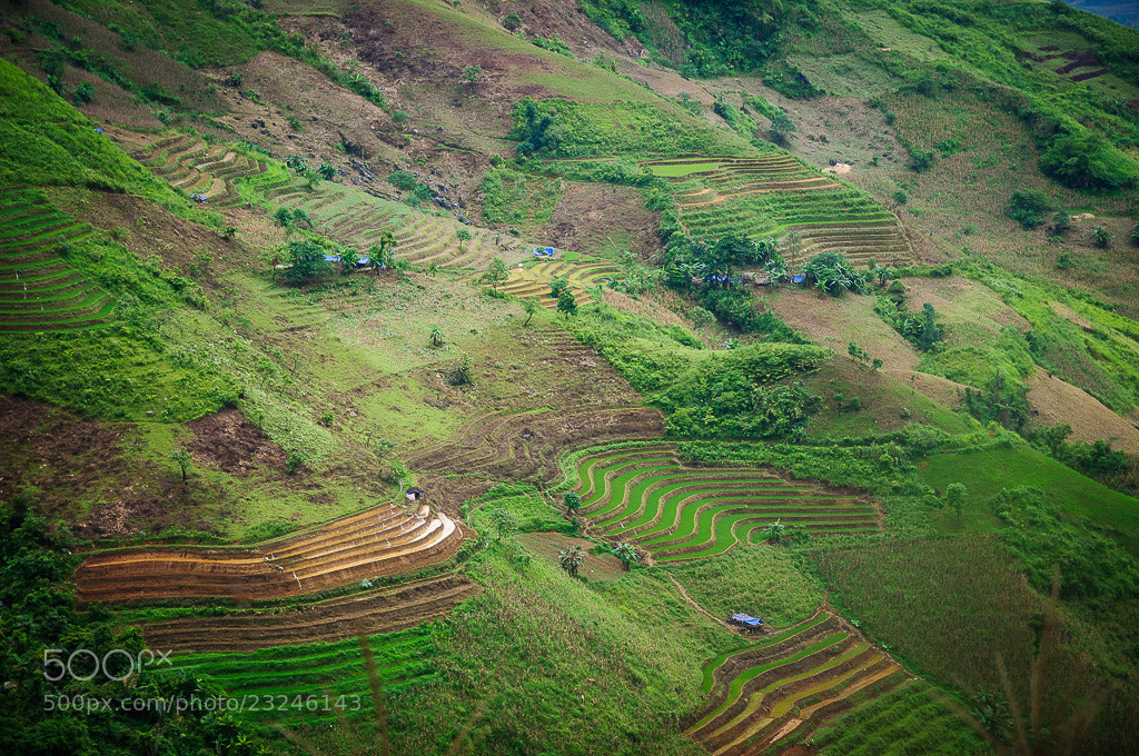 Photograph Rice field in Vietnam by Johnny Hansen on 500px