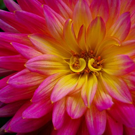 flower #26