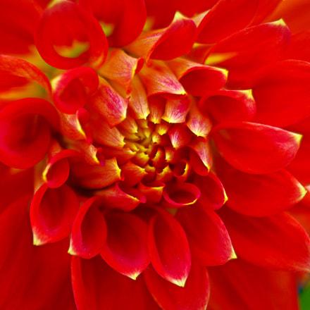 flower #28