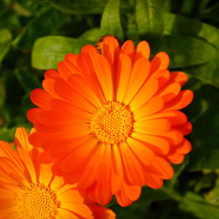 flower #31