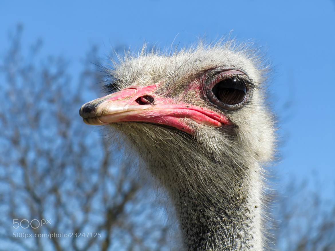 Photograph Ostrich by Rudolf Hes on 500px