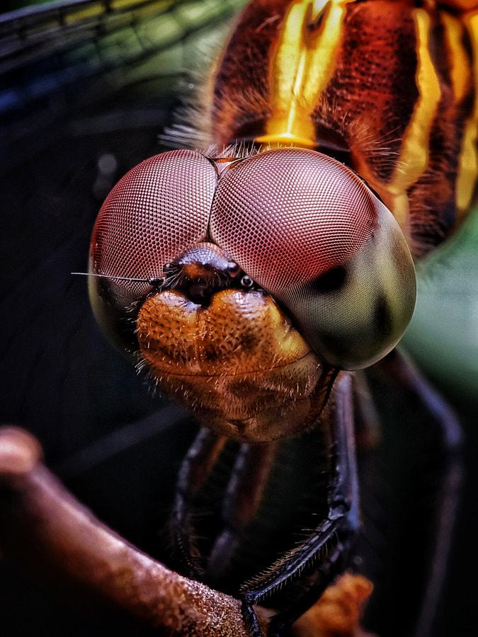Big Eyes by Goodpharm111 on 500px.com