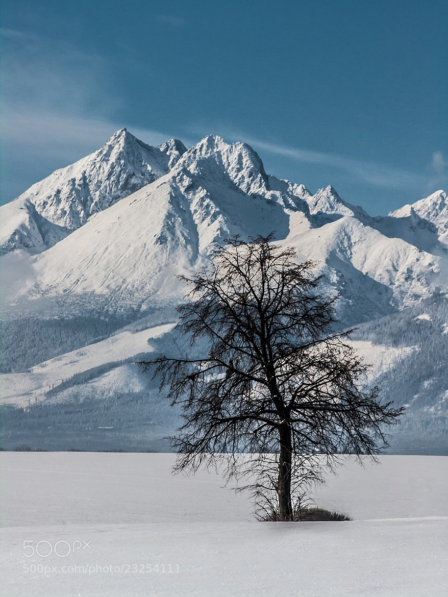 Photograph Frozen Landscape Under Tatras II by Jozef Mačutek  on 500px