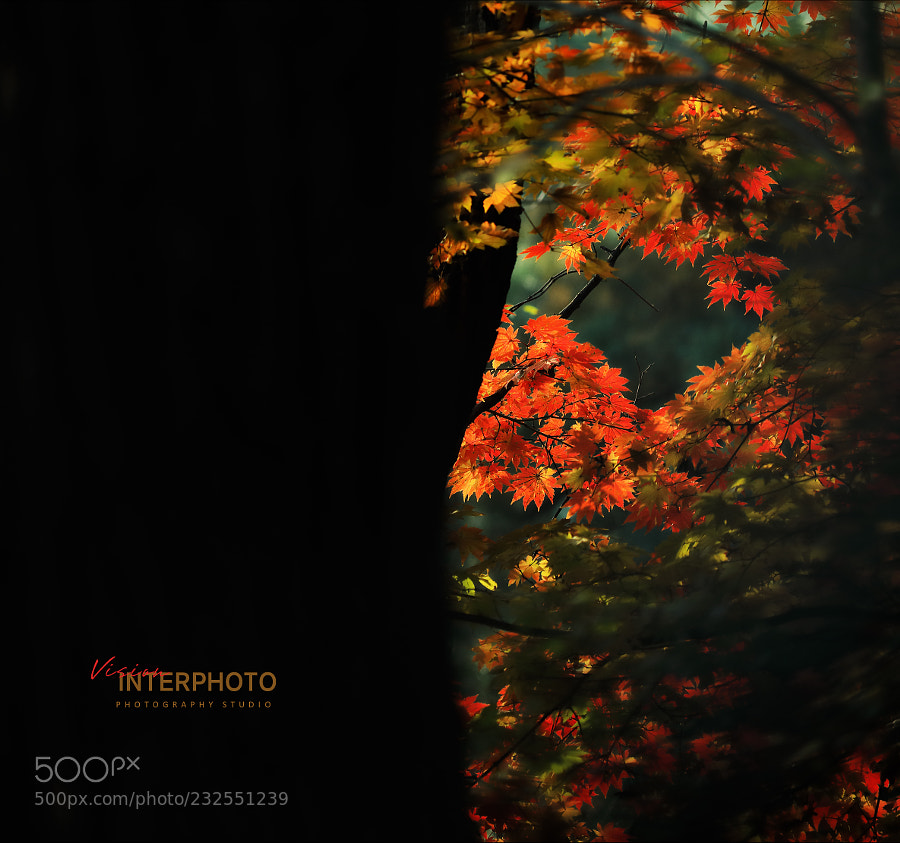 秋Fall…光线与色彩的印象1Impression of light and color…