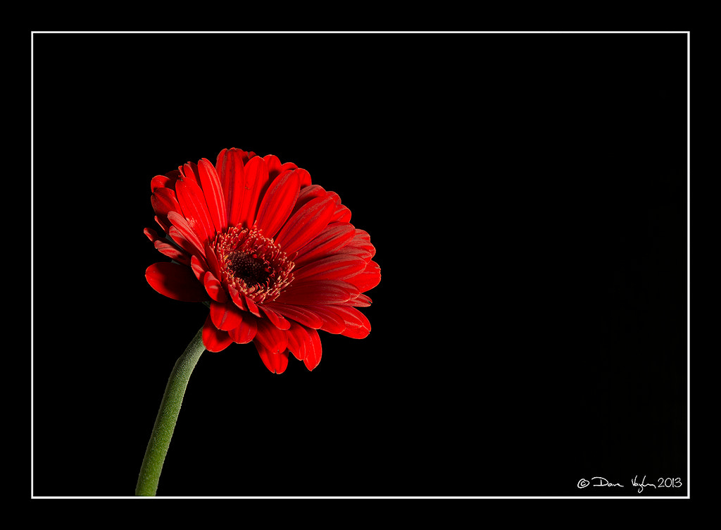 Photograph Red by David Vaughan on 500px