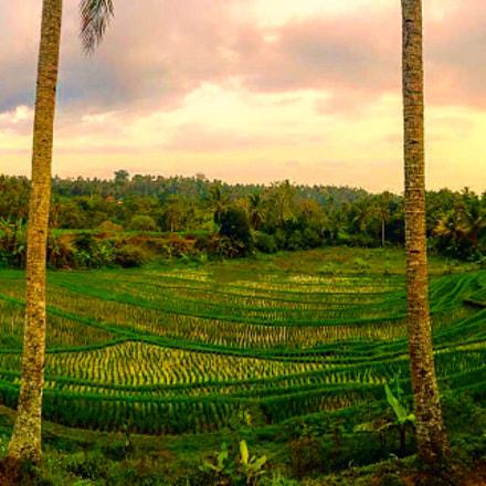Bali Rice Terace