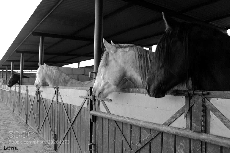 Photograph Horses by LowaRoar on 500px