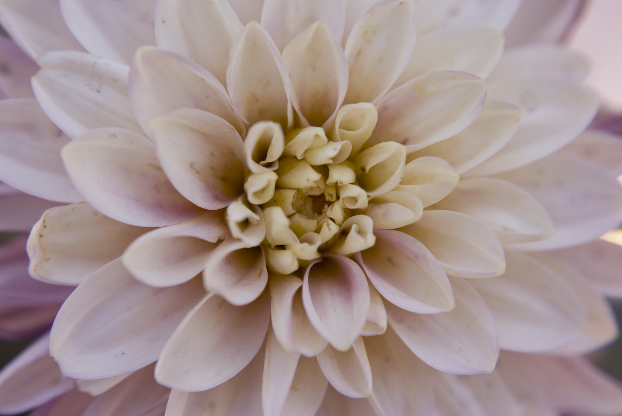 Photograph Alyssa's Flower by Michael Anthony Cantone on 500px