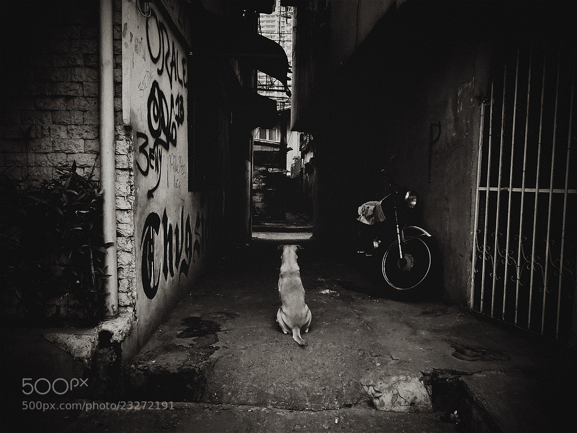 Photograph Dog Gone Days by Junel Mujar on 500px