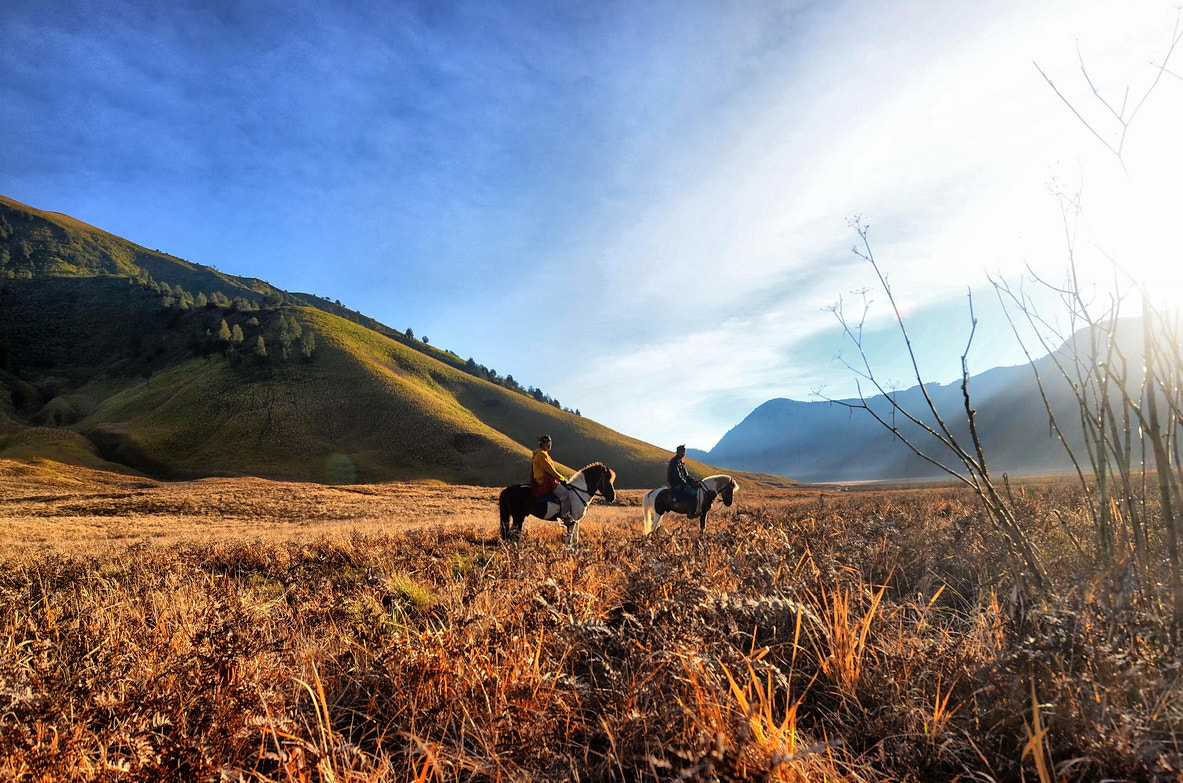 Photograph Local Horsemen at Bromo by laily hassan on 500px