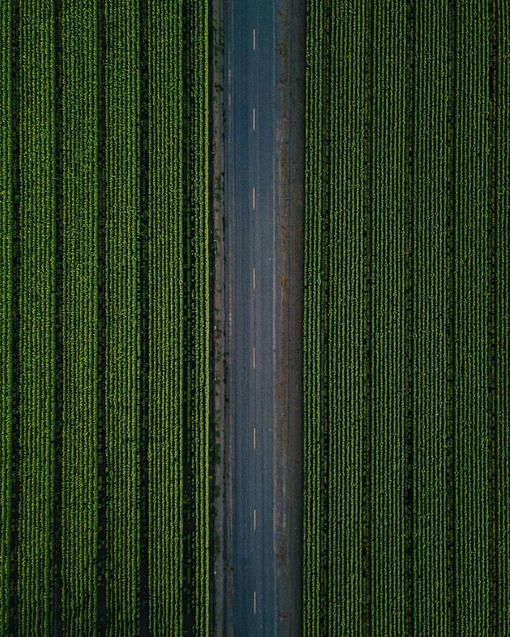 Drone over sunflowers by Oscar Nilsson on 500px.com