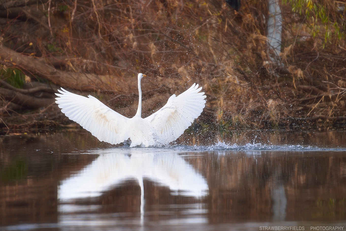 Photograph Egret lake by Jung-Rae Cho on 500px