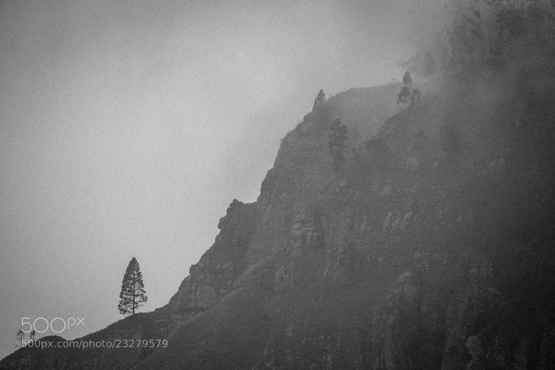 Photograph Anti-social Tree by Sashi Rajamahendran on 500px