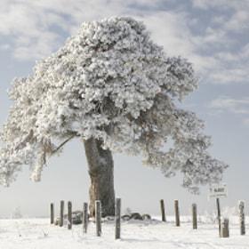 Laekvere pine by Meelis Riisenberg on 500px.com