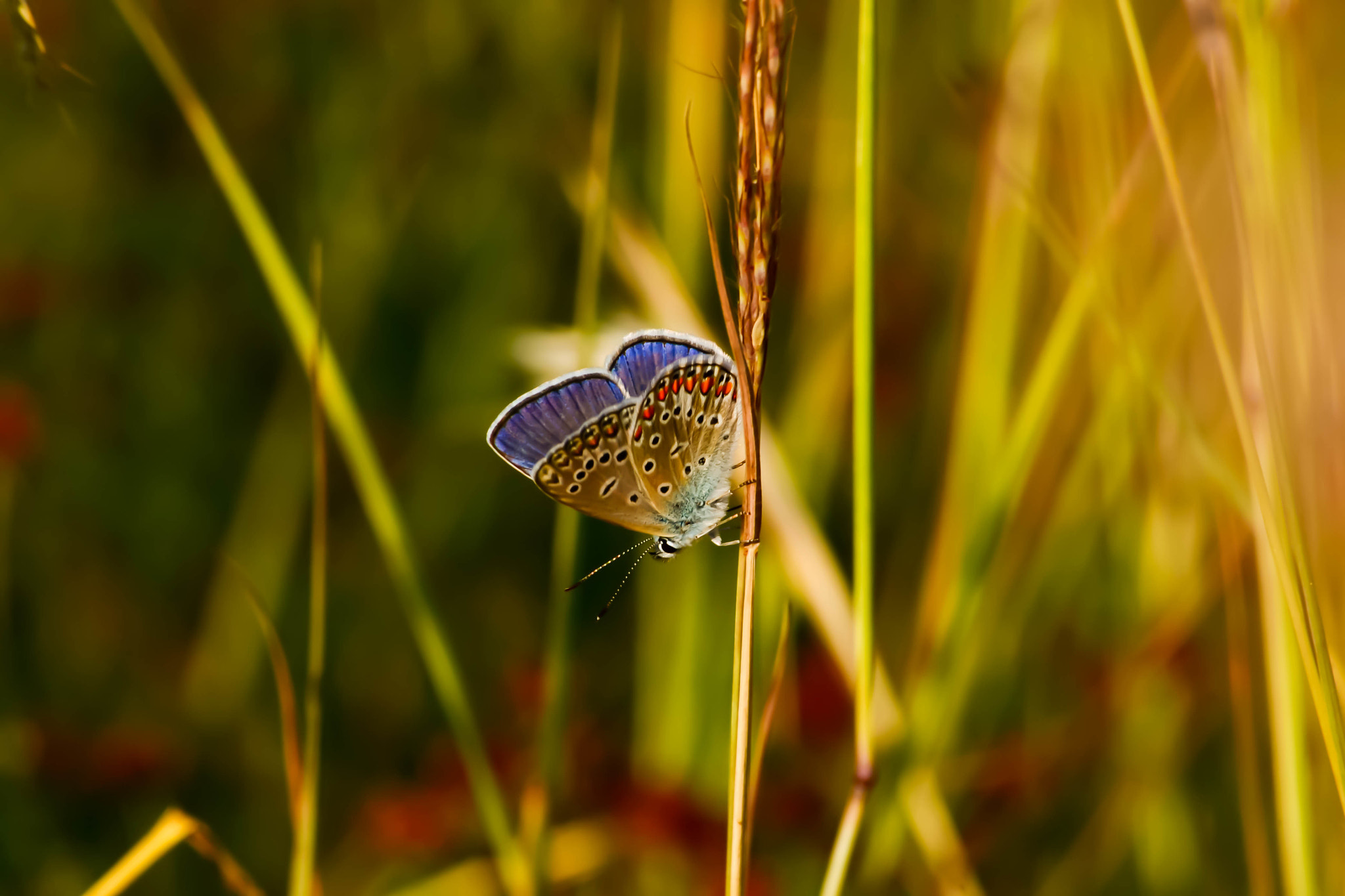 Photograph butterfly by Scurtu Gelu on 500px