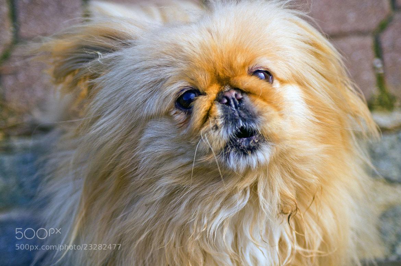Photograph Upset Puppy by Edvard - Badri Storman on 500px