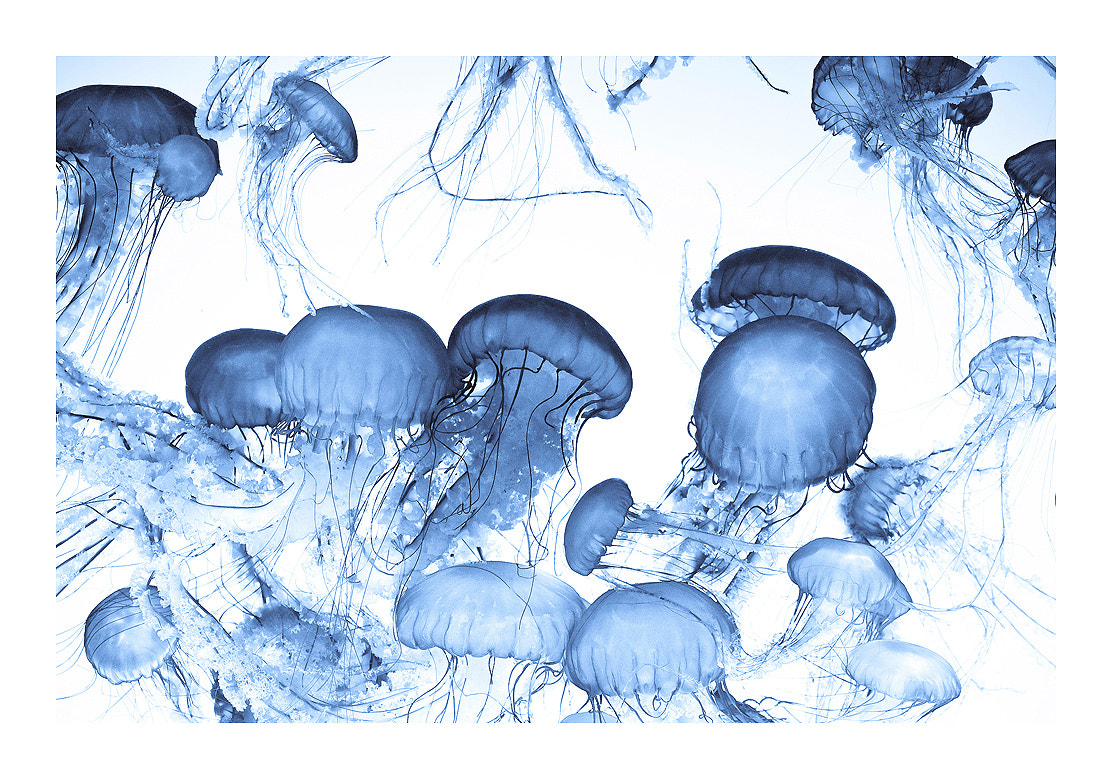 Photograph Jelly Dance II by York Hovest on 500px