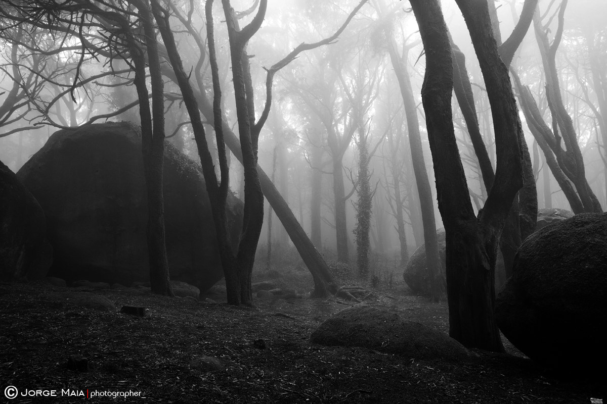 Photograph Haunted woods  by Jorge Maia on 500px