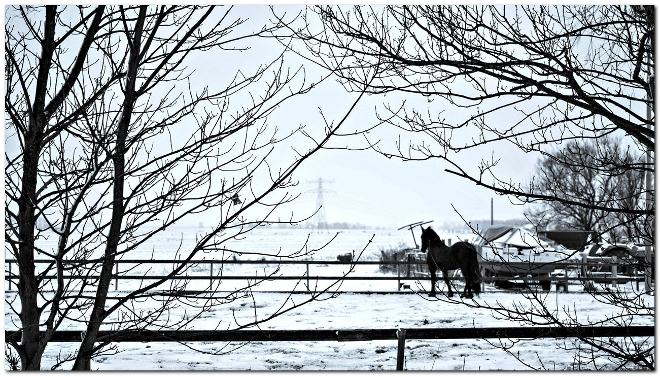 Photograph Looking at a white world by Michel Derksen on 500px