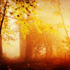 A Forest by Delphine Devos (Delphine)) on 500px.com