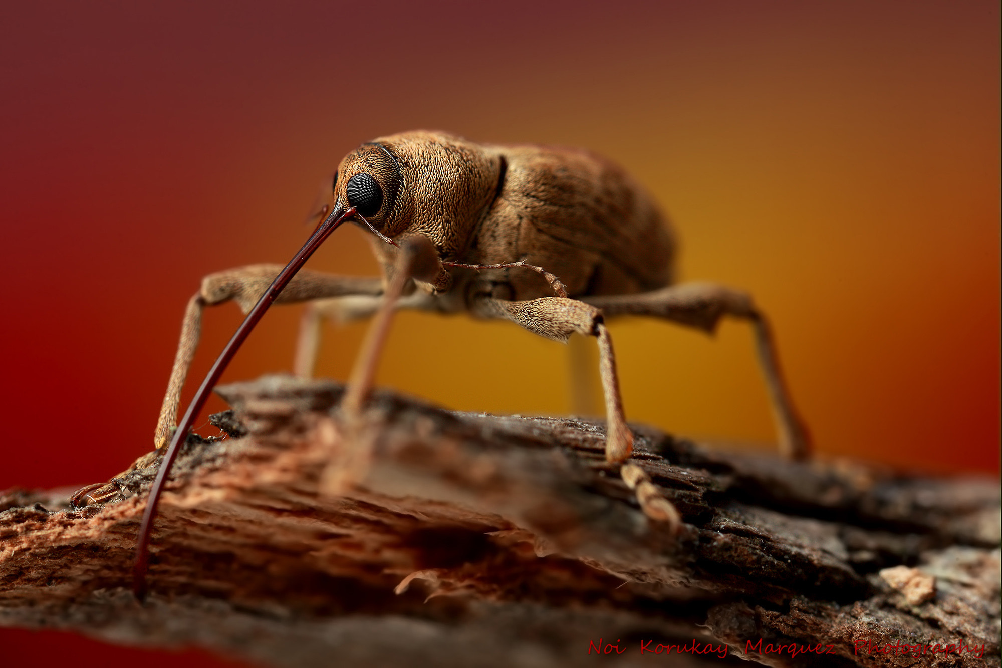 Photograph WeeVil by Noi korukay Marquez on 500px