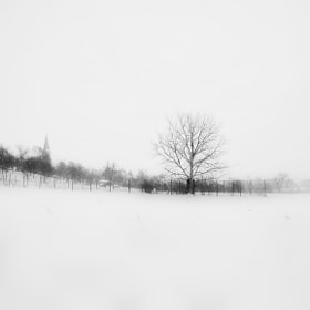 Winter  by Dragan Djuric (gecdra)) on 500px.com
