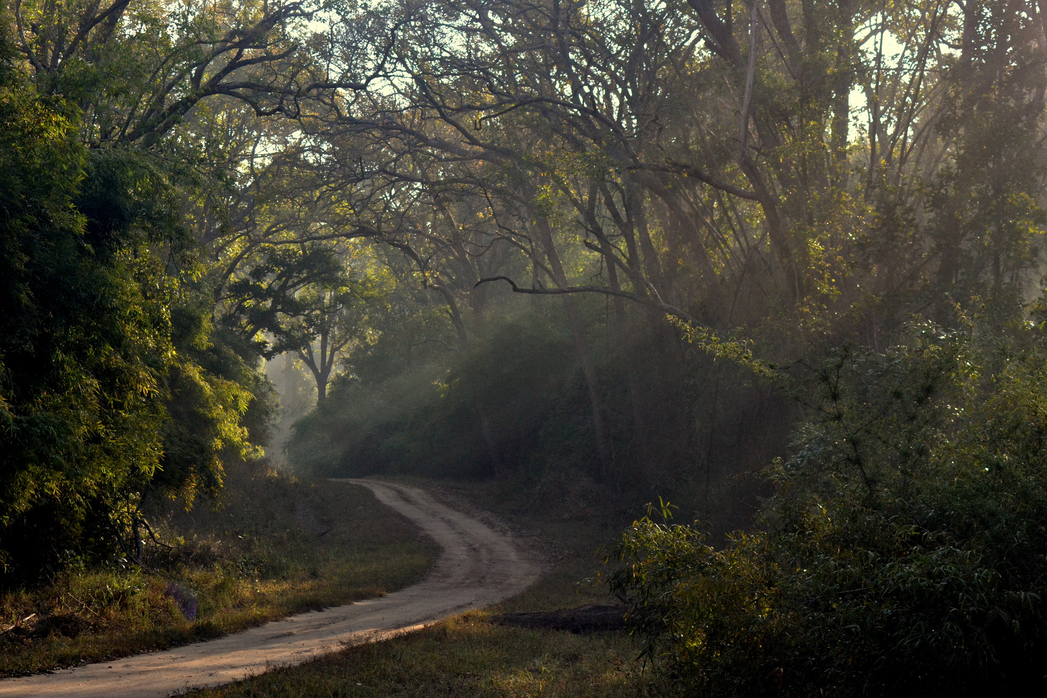 Photograph The Mesmerising forests of Kanha by Abhinandan Shukla on 500px